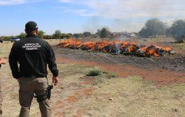 FGR incinera más de dos toneladas de narcótico en Zacatecas